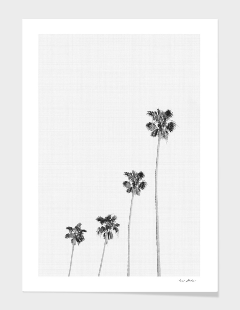 Palm Trees Monochrome