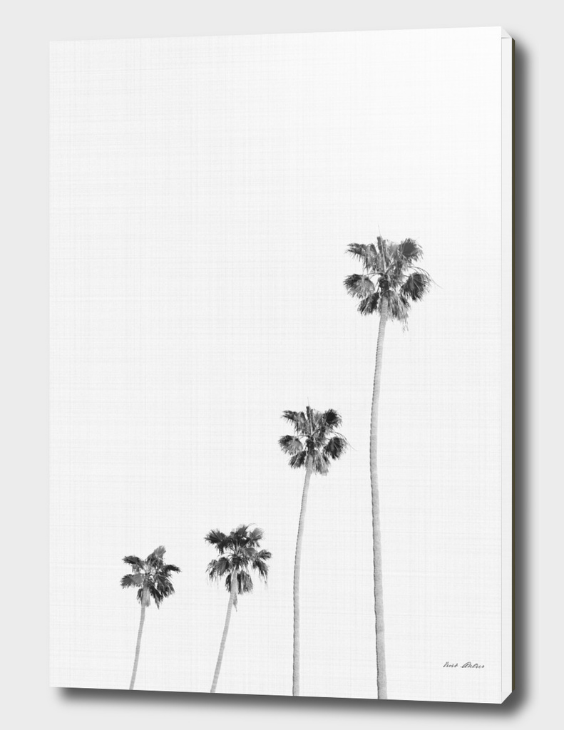 Palm Trees Monochrome