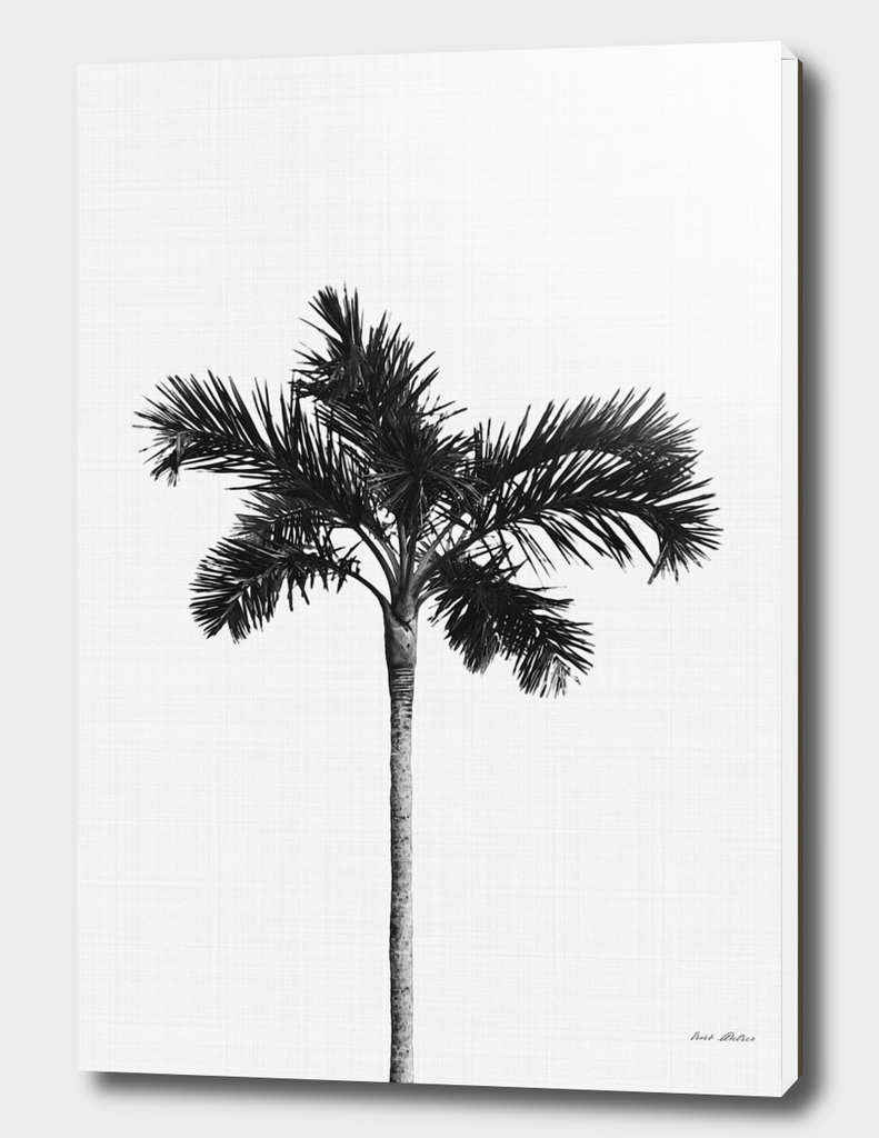 Palm Tree Monochrome
