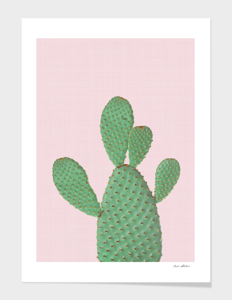 Cactus Pink II