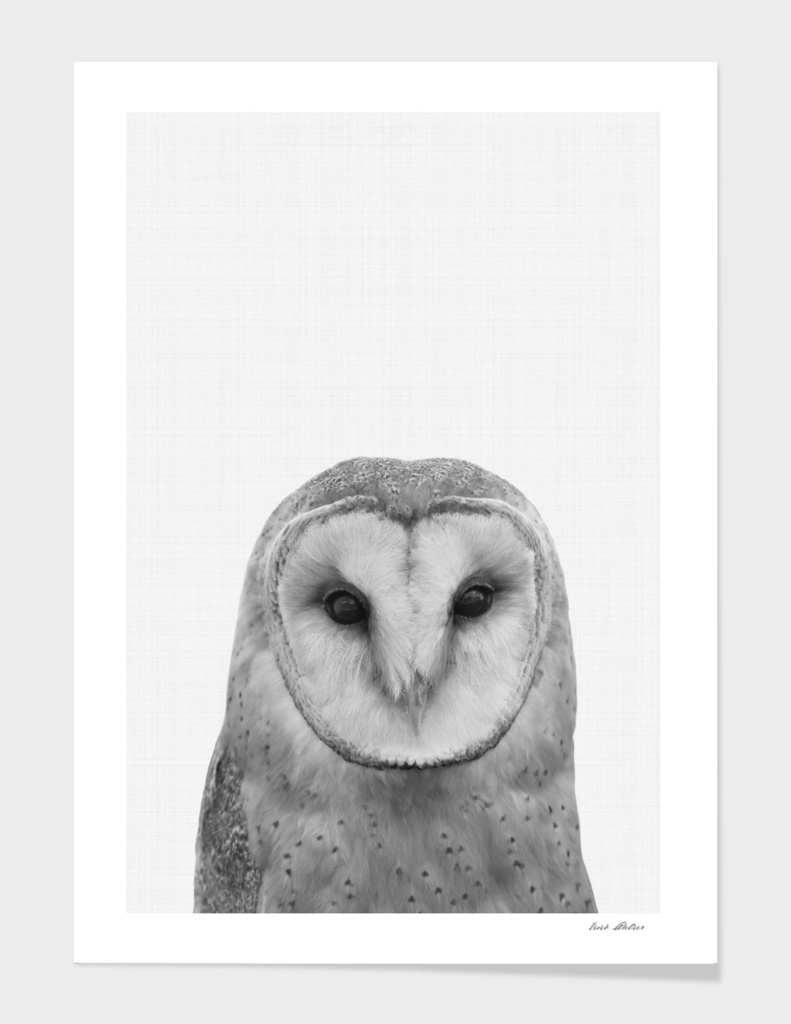 Owl Portrait II