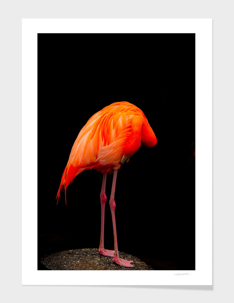 Weird Flamingo