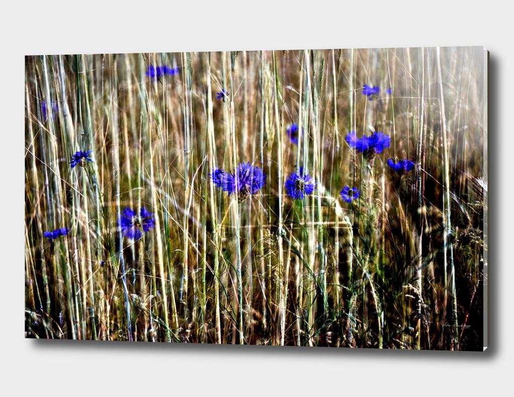 Blue Floral Summer Impression