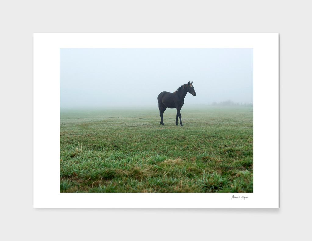 Lonely black horse in misty meadow