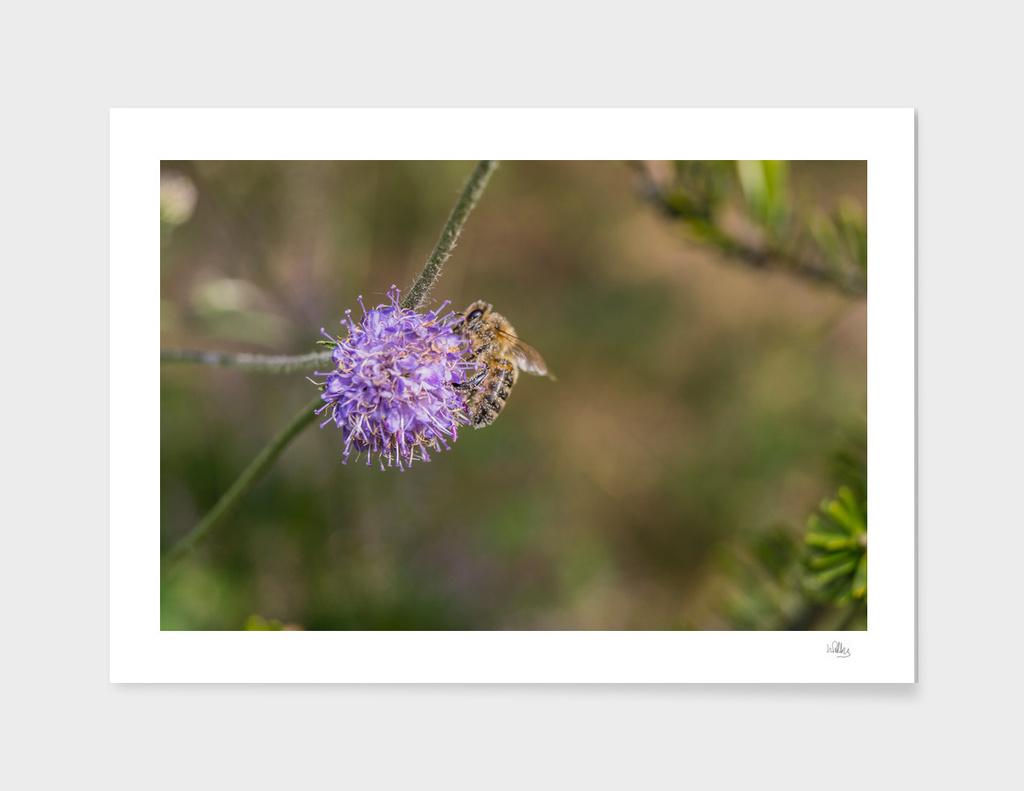 Pollen Collector