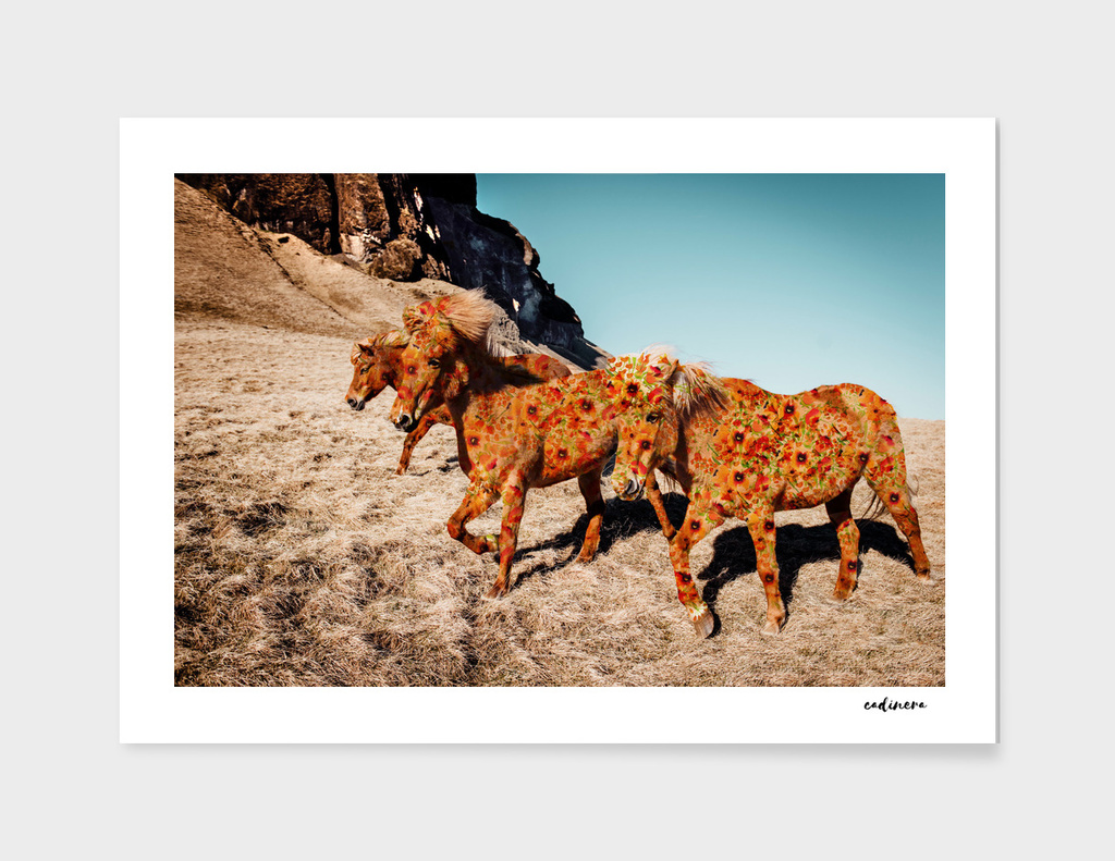 Wild Horses On Flowers