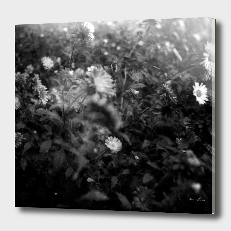Flor médio formato_2