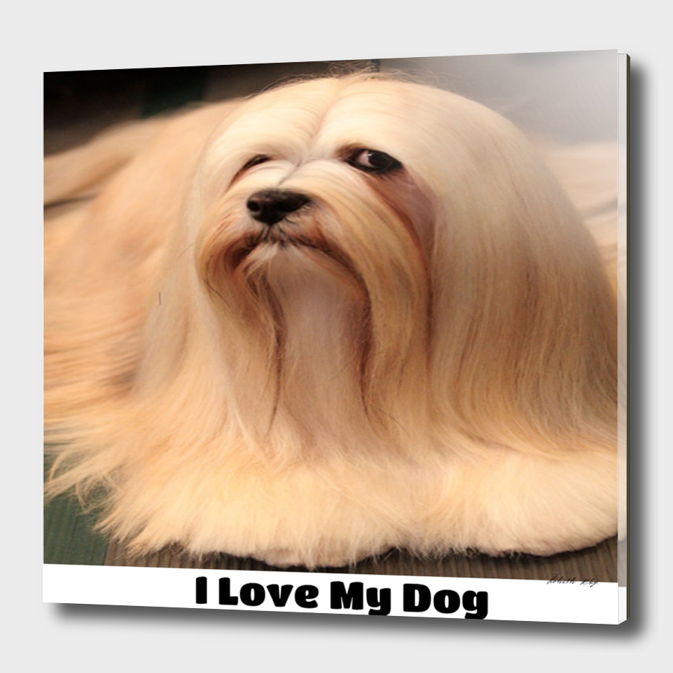 I love my Lhasa Apso Dog Breed