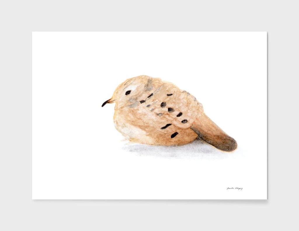 A Medellin Bird