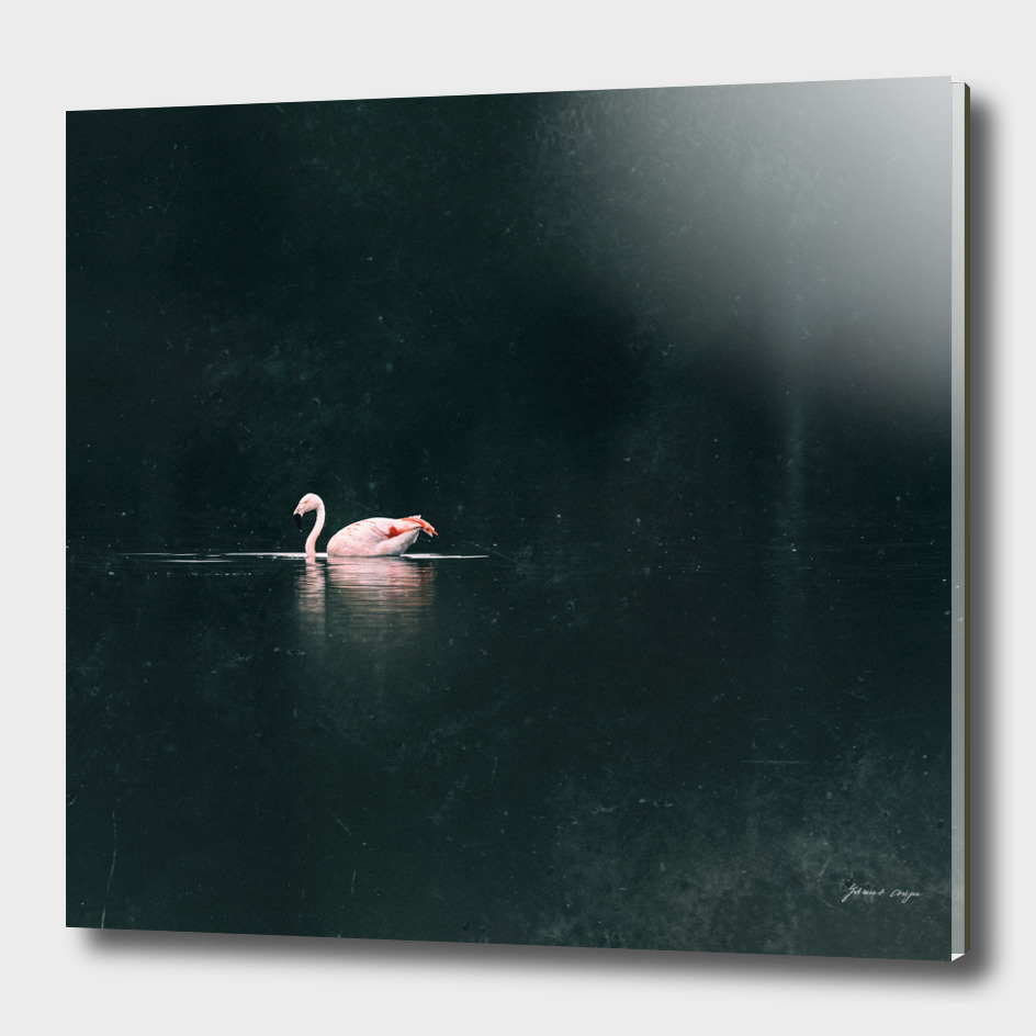 One flamingo floating in lake near bushes