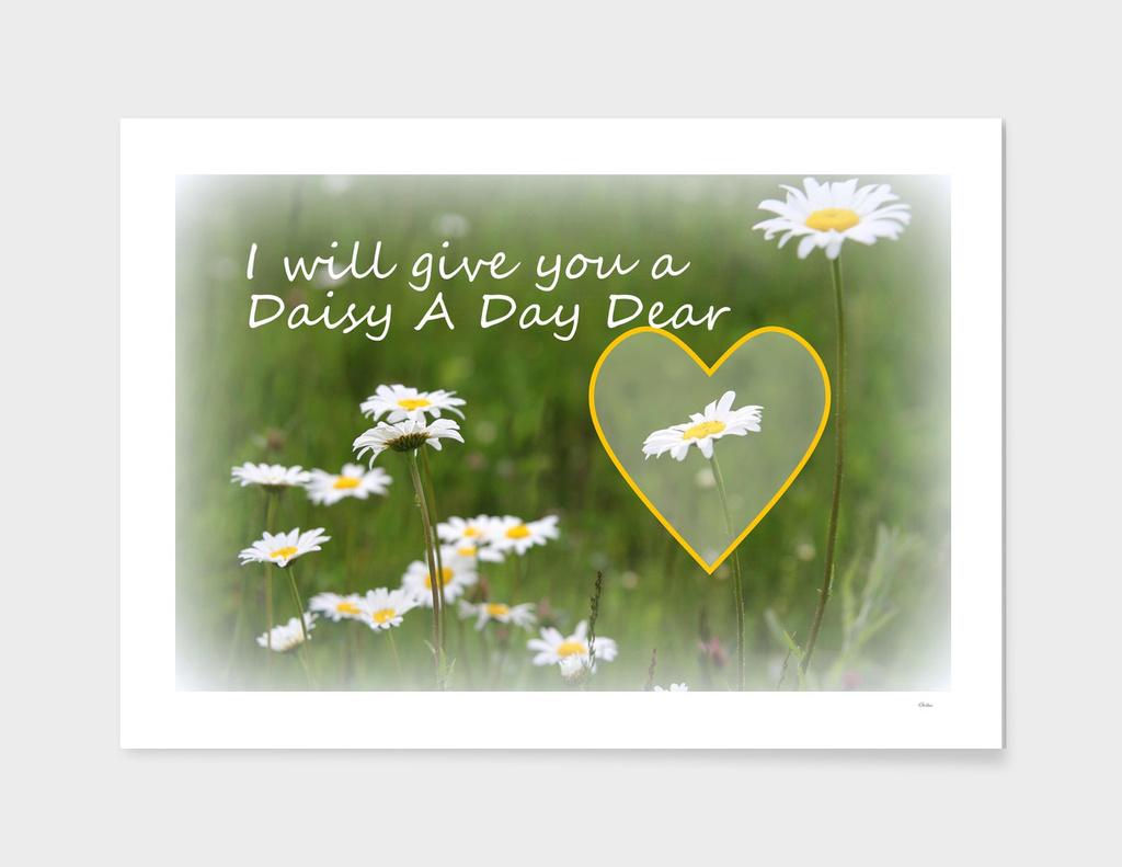 Daisy A Day