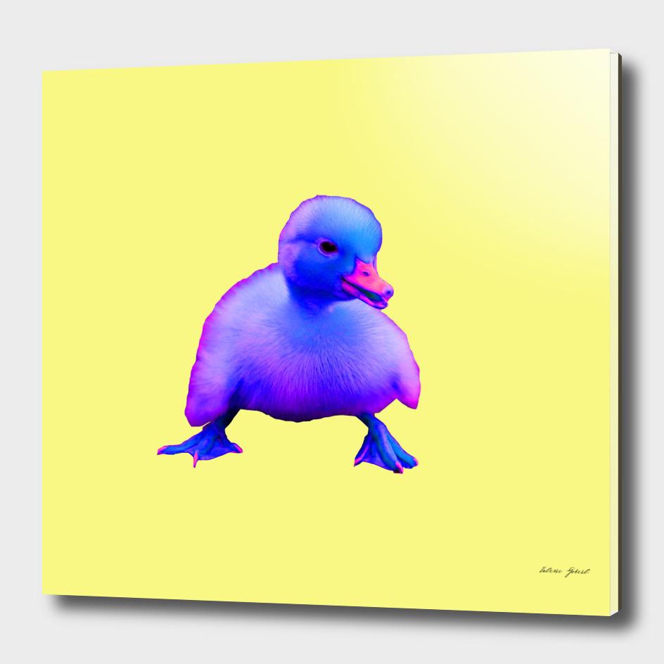 Pop Duckling