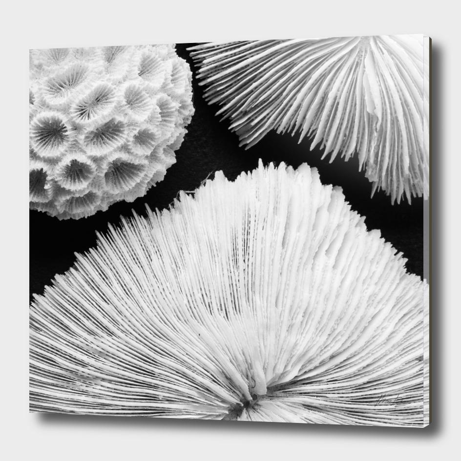 Seashell Study No.4