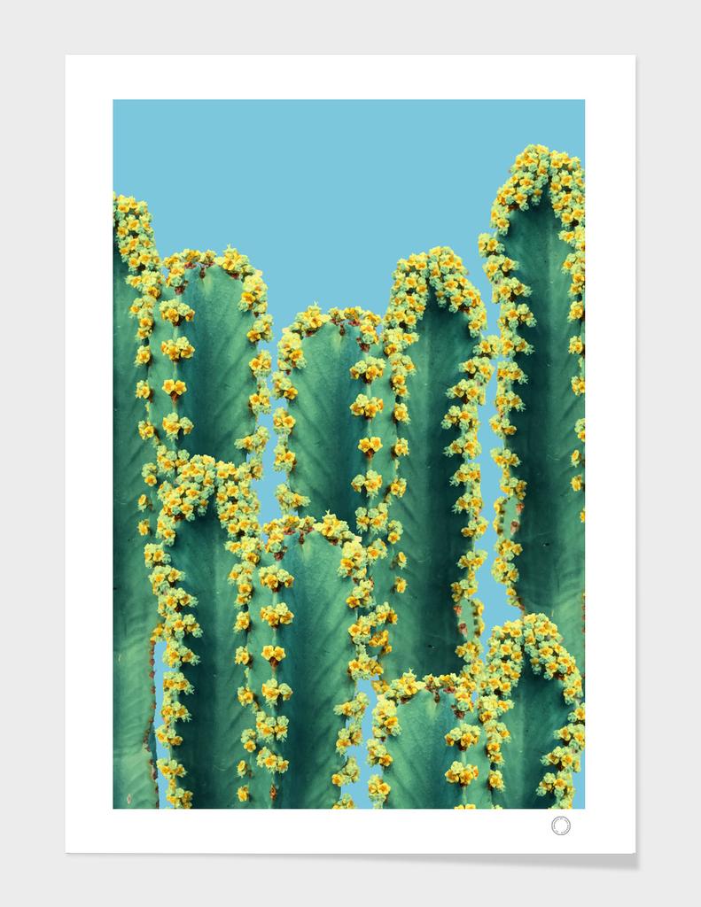 Adorned Cactus-v2