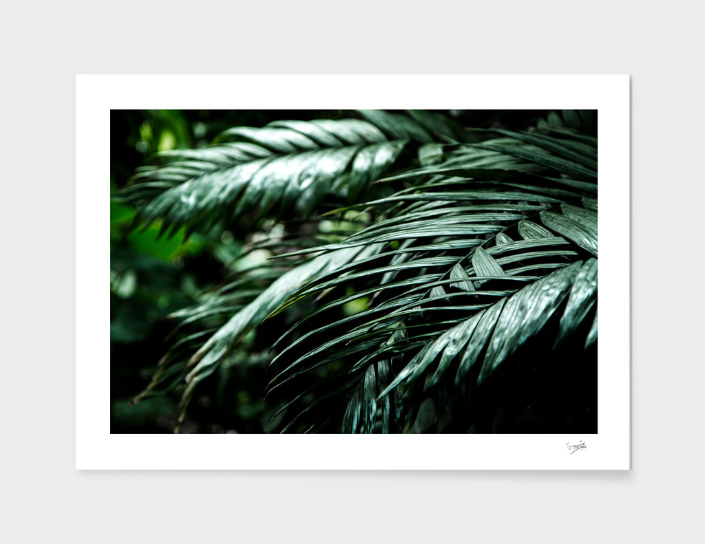 Tropical leaves 02