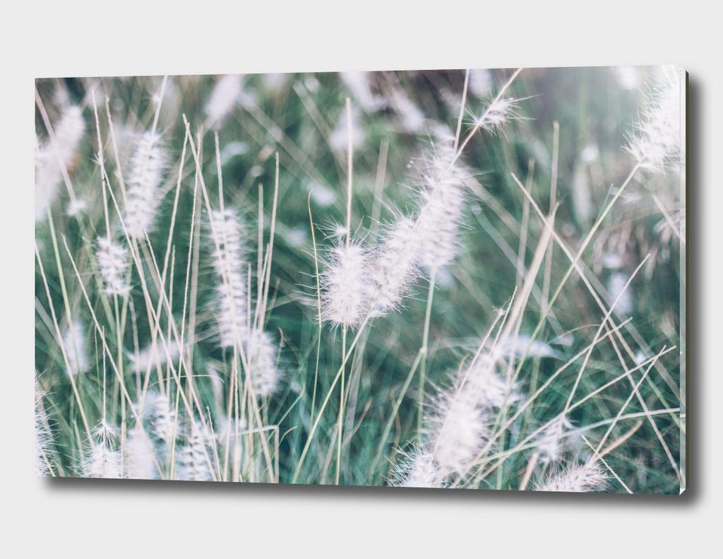 Timothy Grass