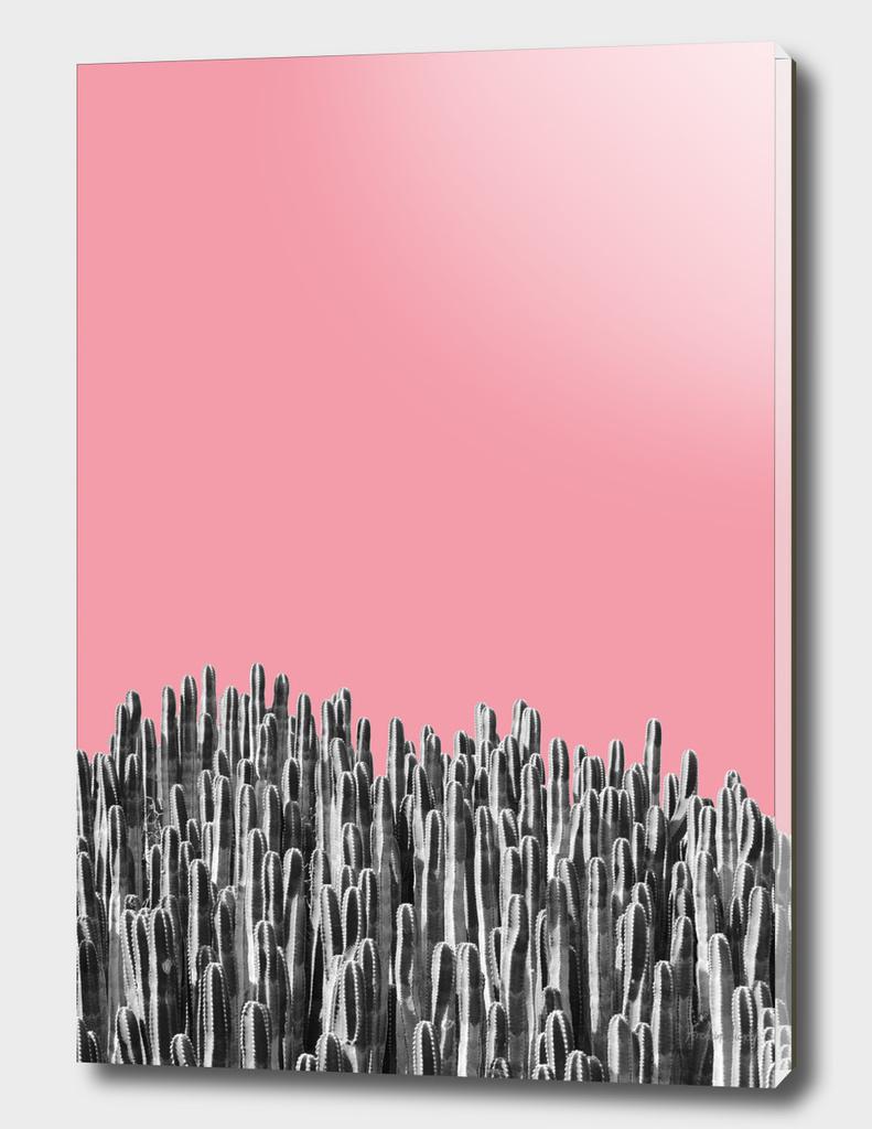 Cacti 02