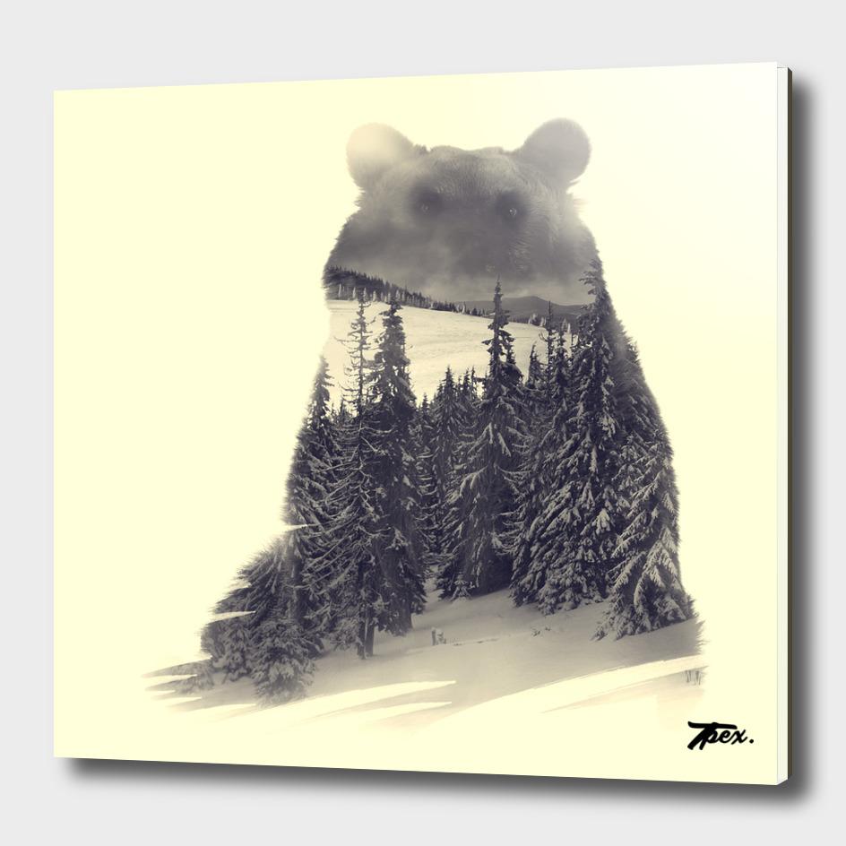 Bear exposition #01