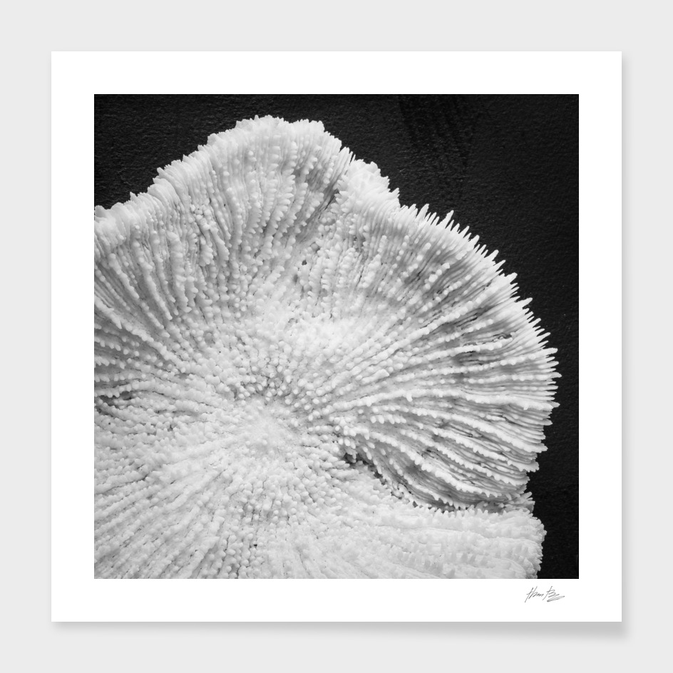 Seashell study No.6