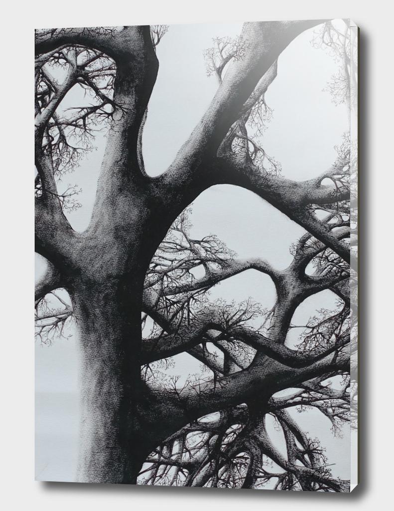 Tree - Declination 10
