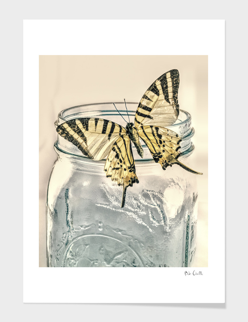 Butterfly On A Mason Jar