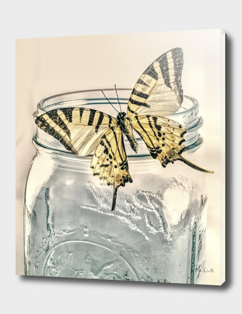 Butterfly On A Mason Jar