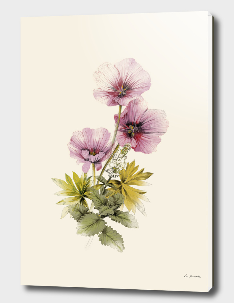 Geranium And Gardenmint