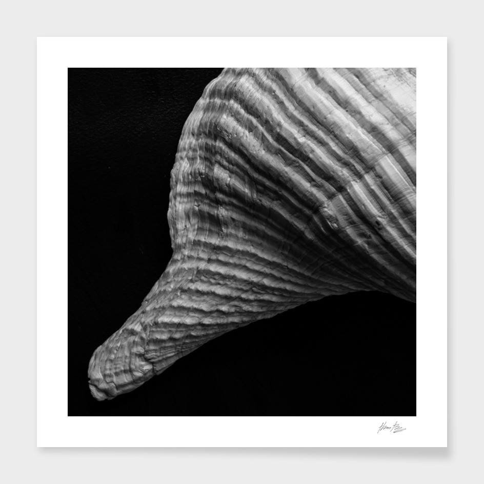 Seashell Study No.14