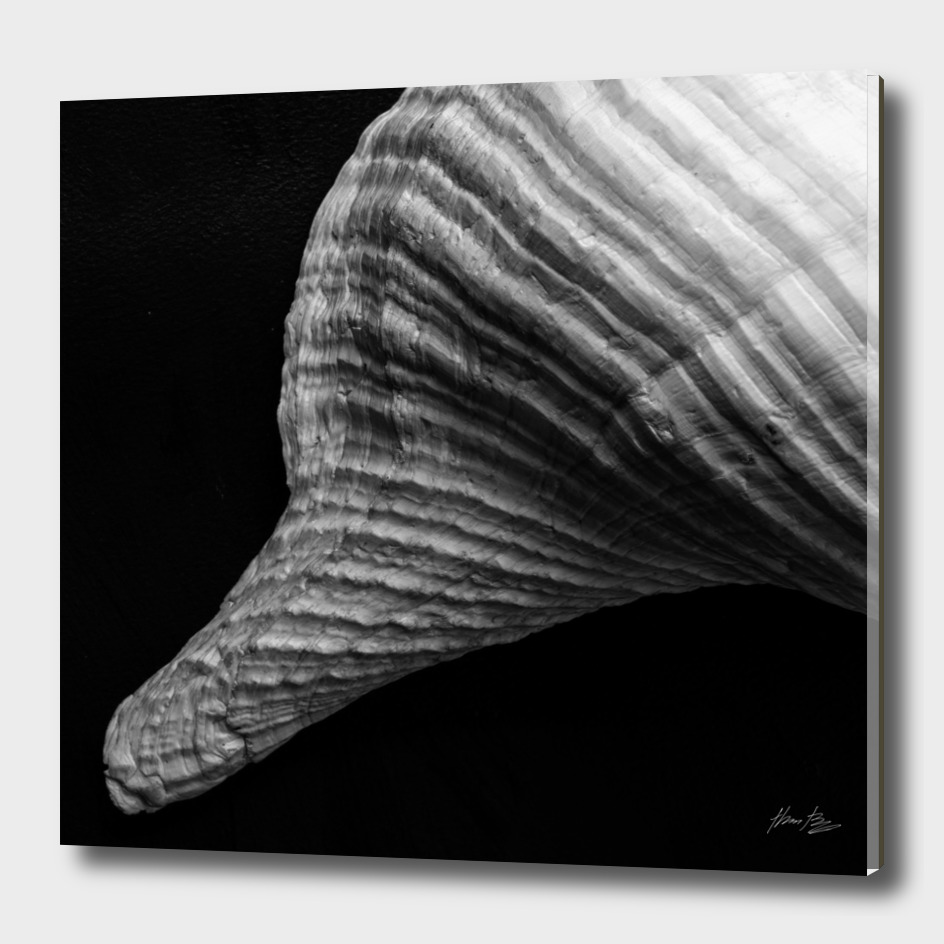 Seashell Study No.14