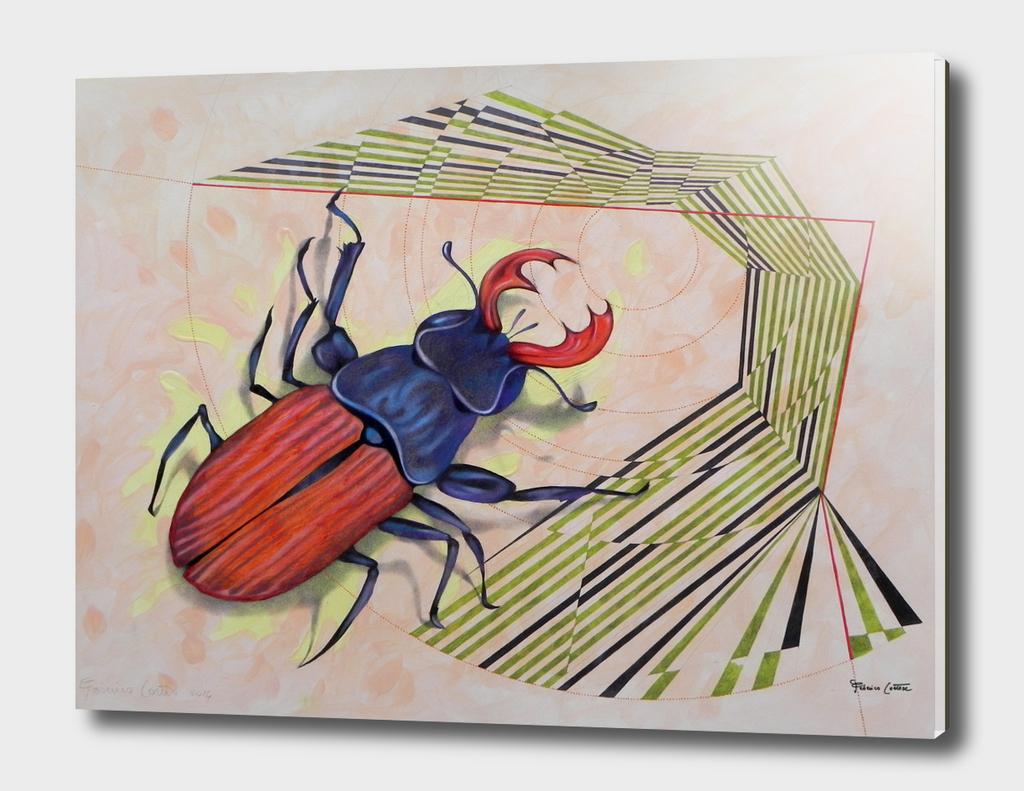Stag - beetle