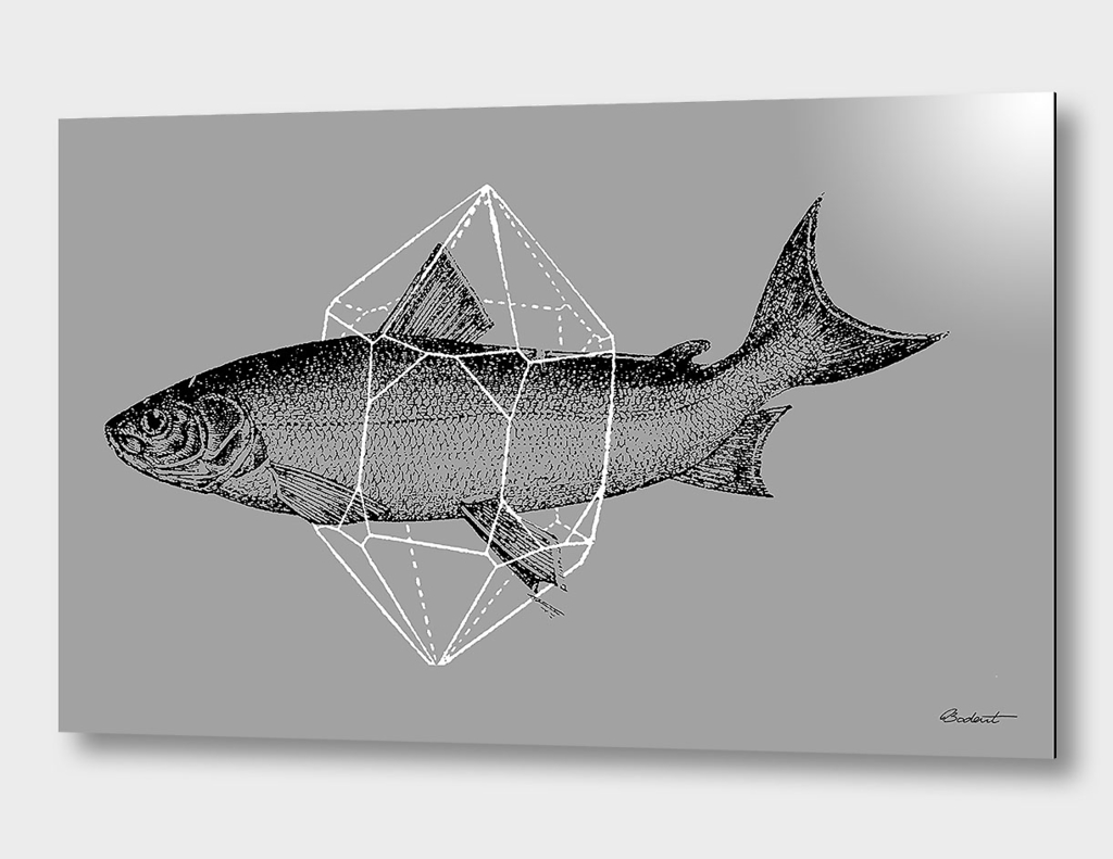 Fish in Geometrics