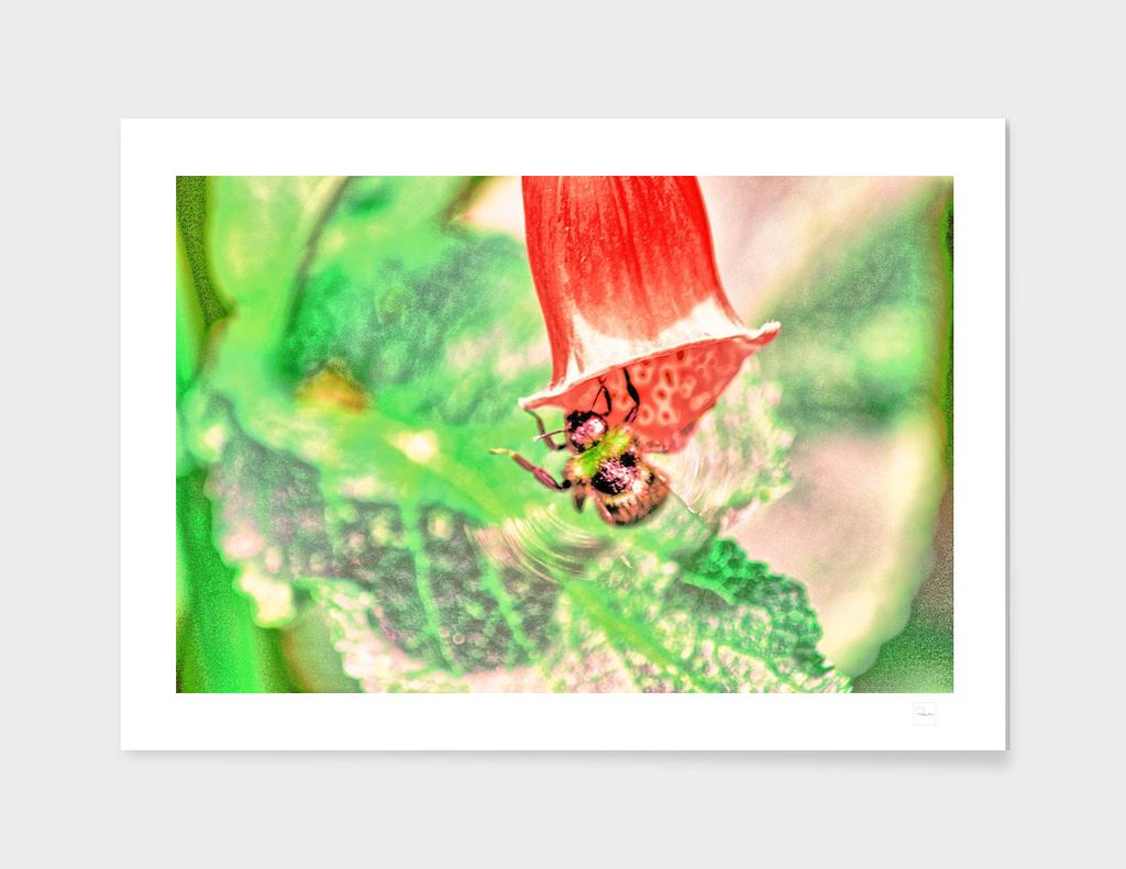 BUMBLE BEE ORANGE