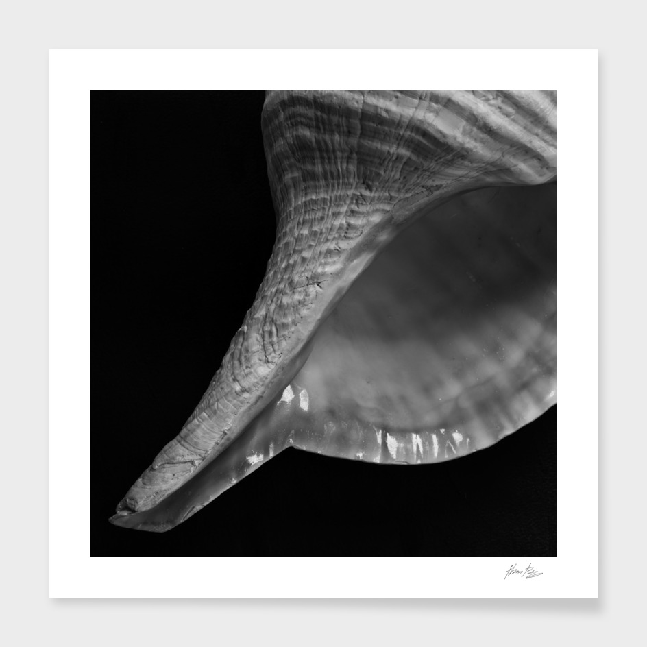 Seashell Study No.15