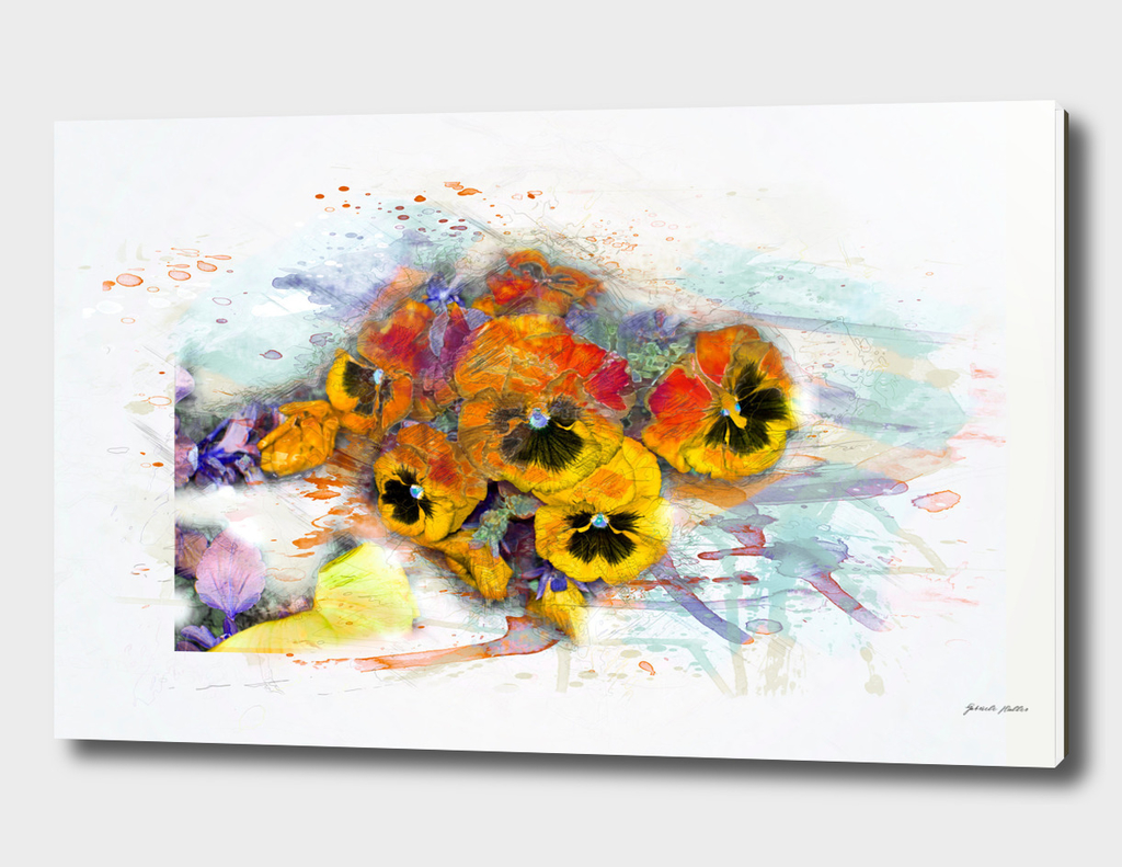 Pansy Flowers - Watercolor, Illustration, Splash