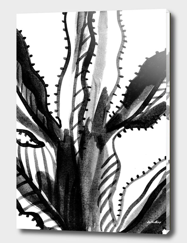 Black and White Cacti