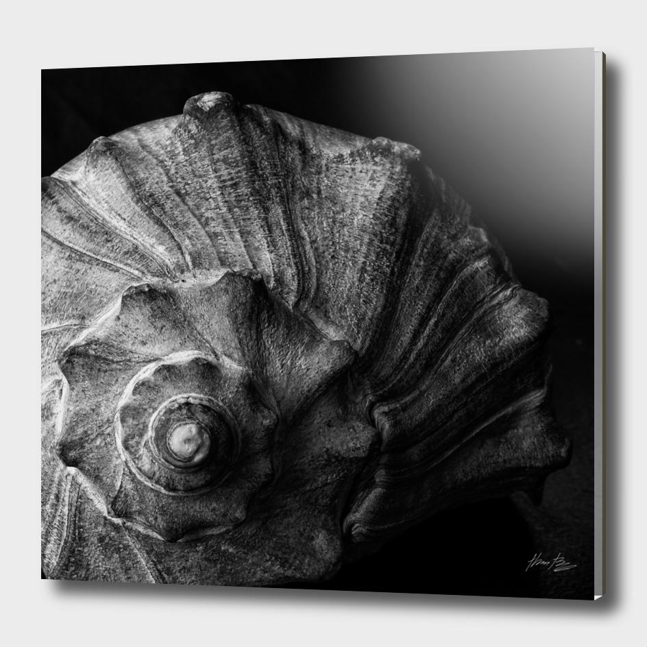 Seashell Study