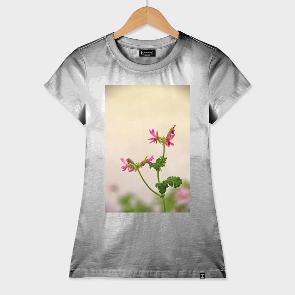 Geraniums (Pelargonium) #5