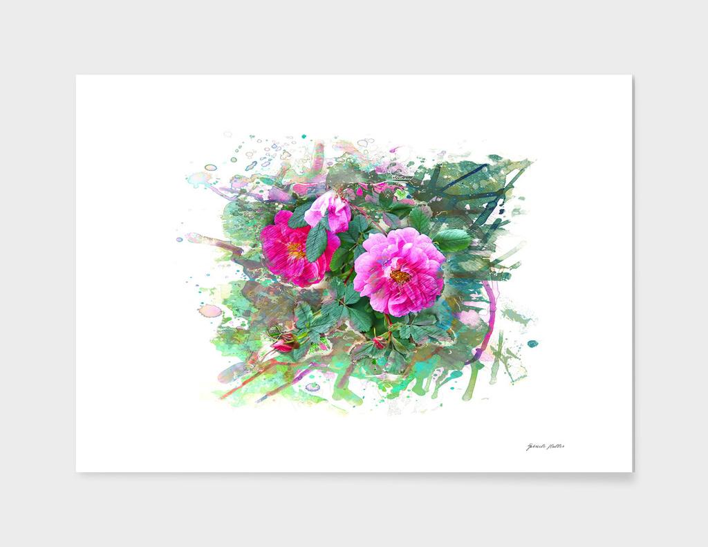 Wild Roses, Dog's Roses - Pink Flowers - Watercolor, Splash