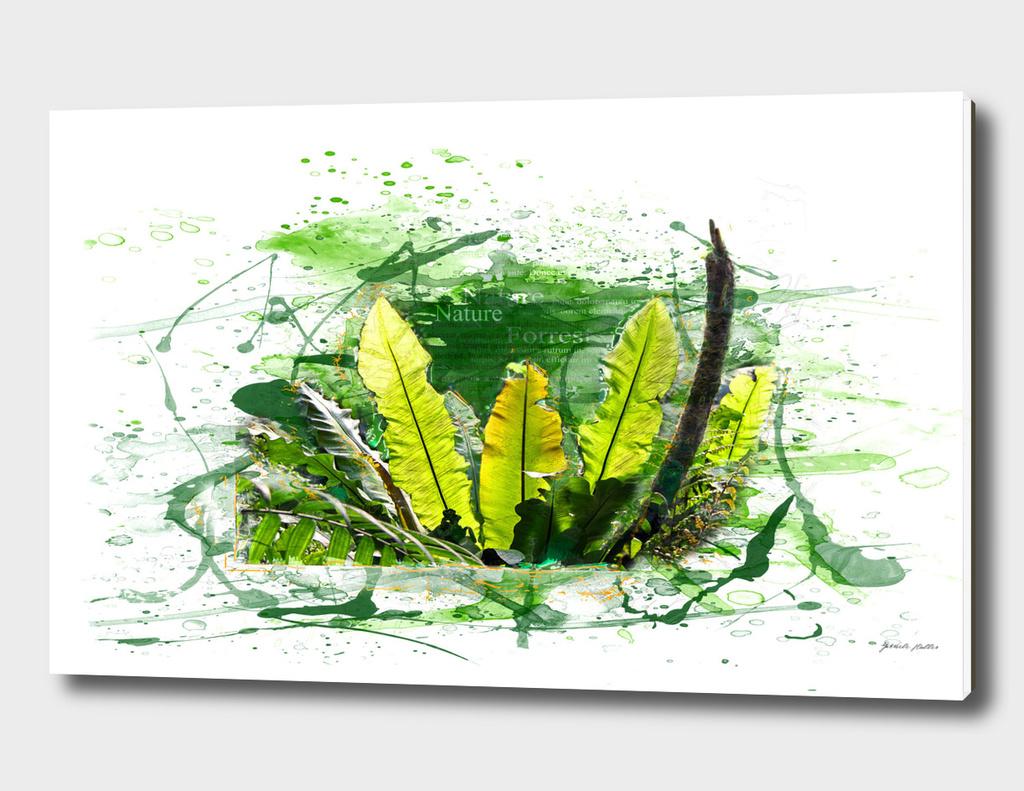 Fern Leaves, Plants - Tropical Jungle - Watercolors, Splash