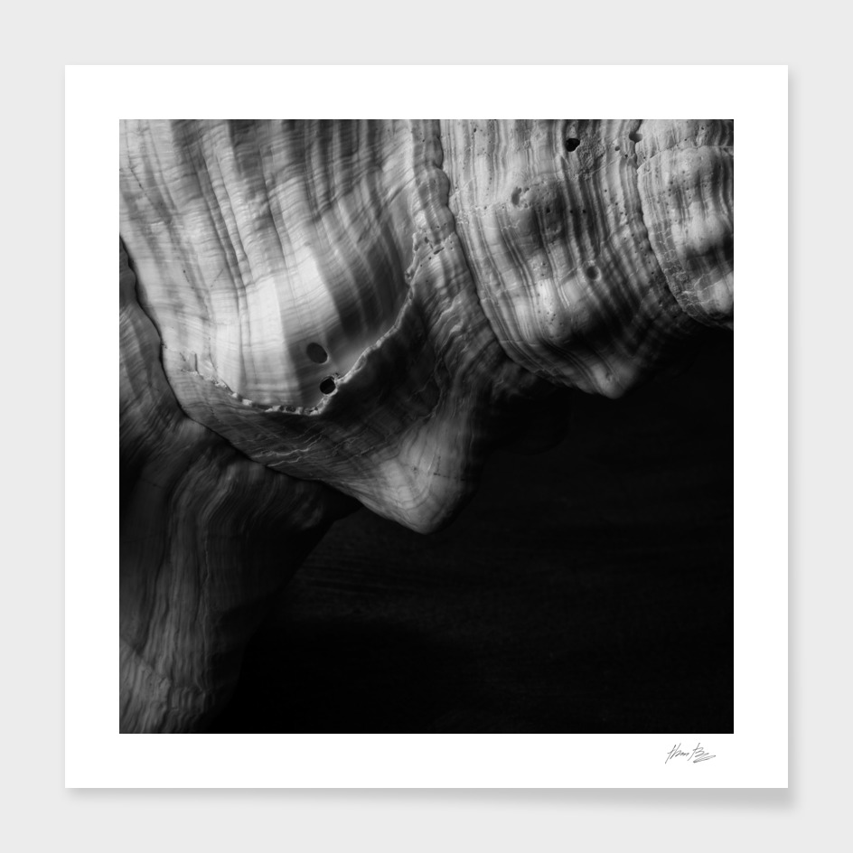 Seashell Study No.21