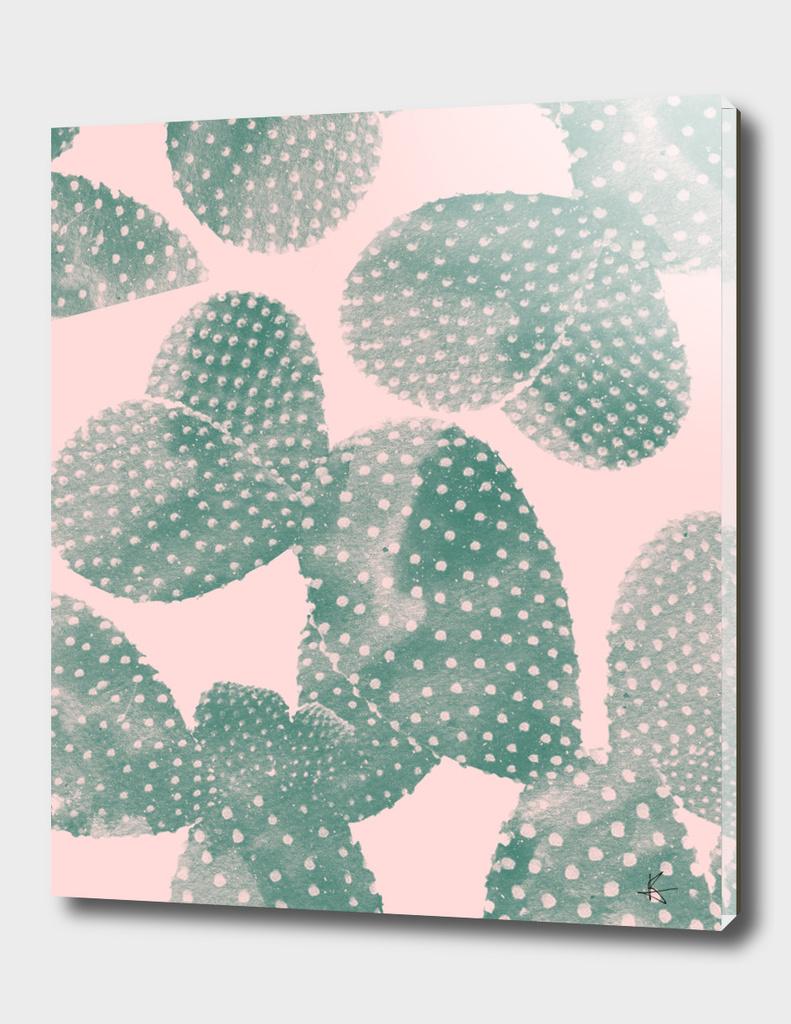 cacti pink