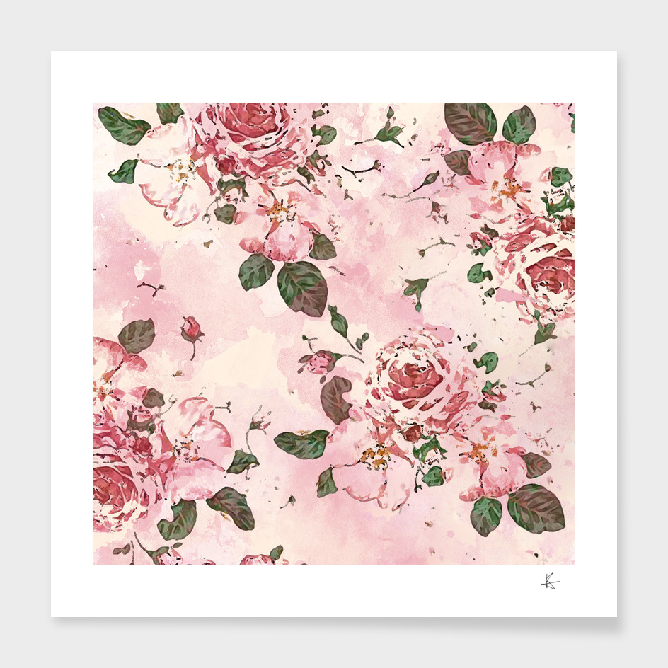 roses blossom