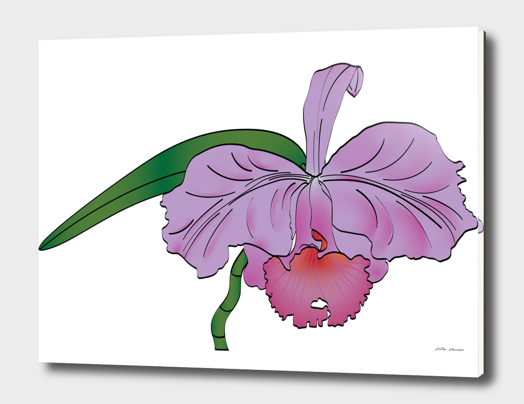 Orchid flower, Purple Cattleya