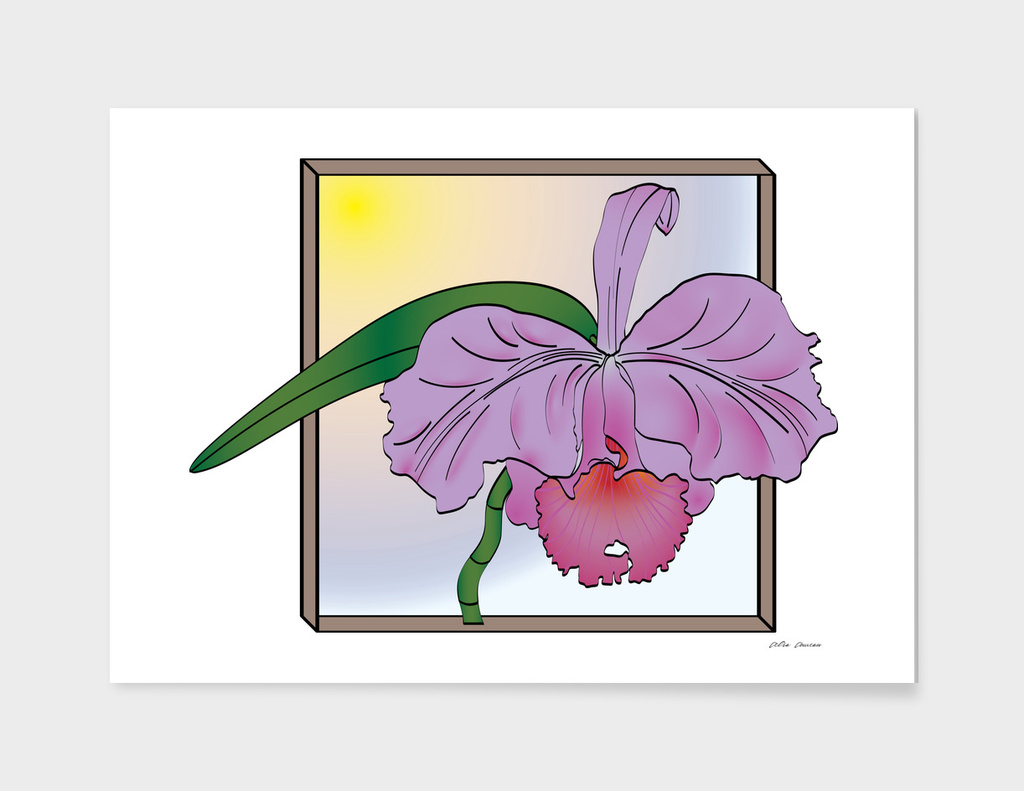 "Purple Cattleya Orchid with ""Window"""