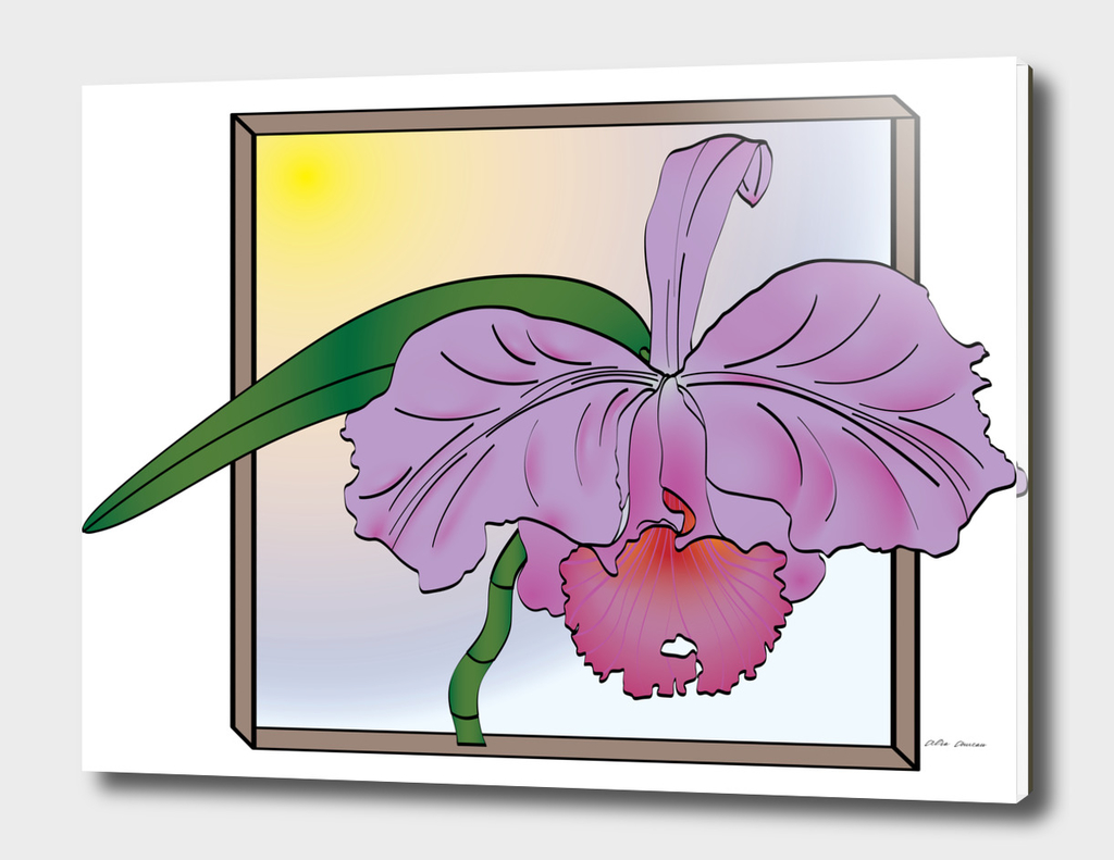 "Purple Cattleya Orchid with ""Window"""