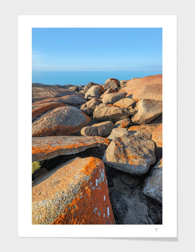 Lichen Rocks At Bridport