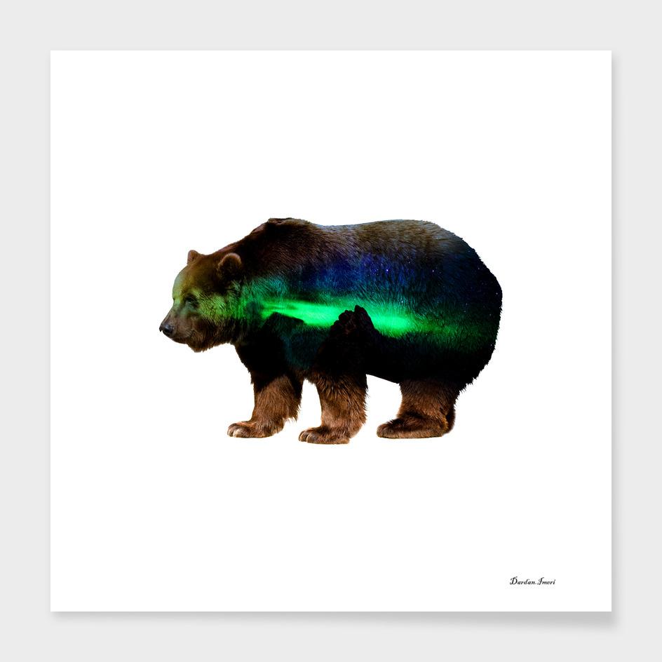 Bear on North Pole