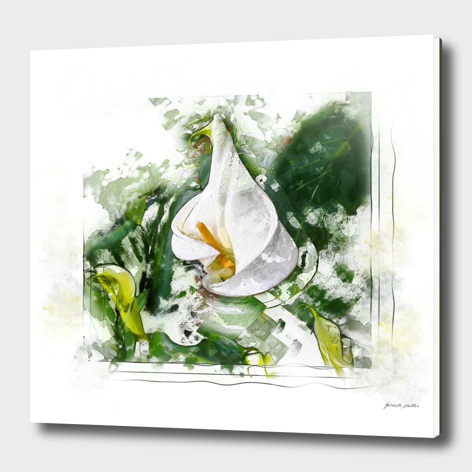 Calla Lily, Flower - Watercolor, Splash