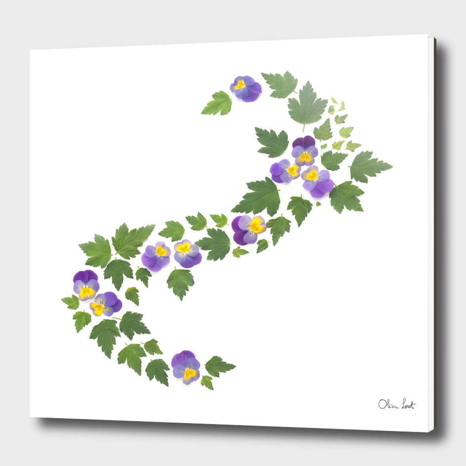 Pansies wave