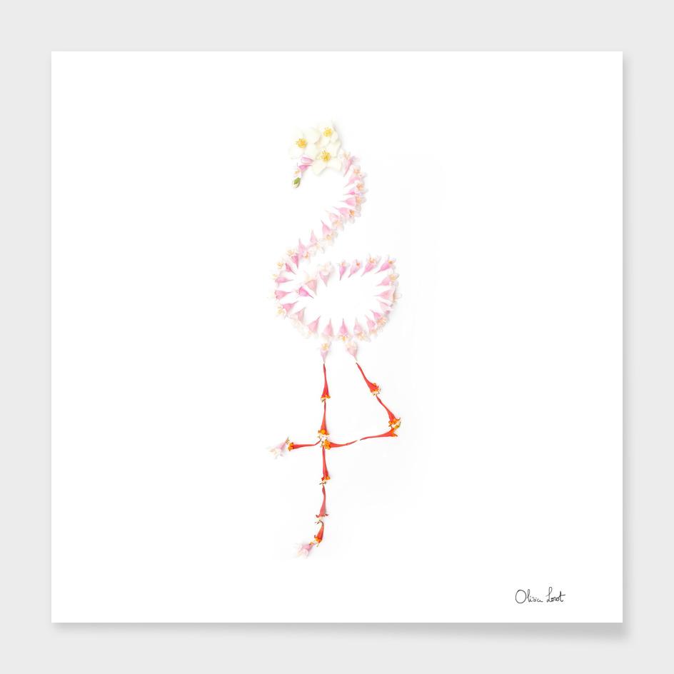 Delicate flamingo